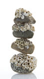 Stacked Barnacle Covered Stones Royalty Free Stock Images