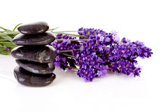 Stacked black pebbles stones and lavender flowers. Over white background Stock Photography