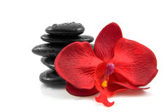 Stacked black spa stones with silk orchid. Stacked black spa stones with water drops and silk orchid, isolated on white background Royalty Free Stock Photo