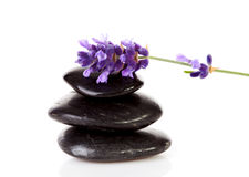 Stacked black stepping stones and lavender flower. Stacked black steping stones and lavender flower over white background Stock Image
