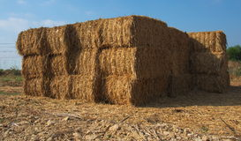 Stacked blocks of dry hay. In a farm in Israel Royalty Free Stock Photography