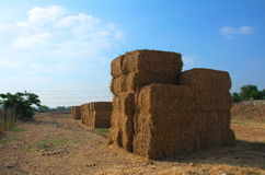 Stacked blocks of dry hay. In a farm in Israel Stock Photography