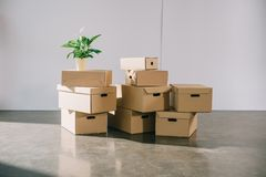 Stacked cardboard boxes and potted plant during relocation stock photo