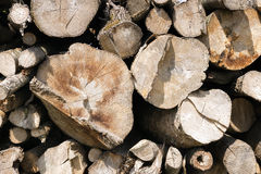 Stacked and chopped tree trunks Stock Images