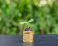 Stacked coins placed and seedling. Stock Photos