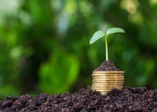 Stacked coins placed and seedling. Stock Image