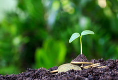 Stacked coins placed on the soil and seedling Stock Image