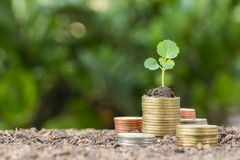Stacked coins placed on the soil and seedling Stock Photo