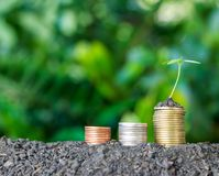 Stacked coins placed on soil and seedling on top. Stock Photos