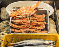 Stacked Crabs Royalty Free Stock Photo