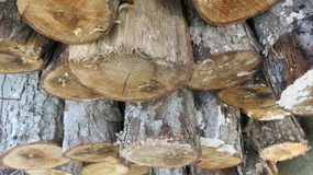 Stacked Cut Logs Close Up. Stacked firewood drying for the winter Stock Images
