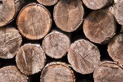Stacked cut logs stock photography
