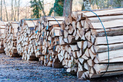 Stacked and cut logs Stock Photo