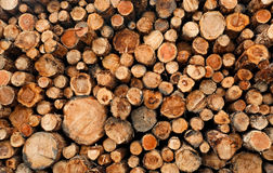 Stacked cut raw timber wood logs Stock Images