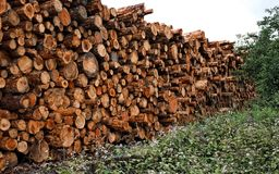 Stacked cut raw timber wood logs Stock Photo