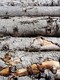 Stacked cut tree log texture Stock Photography