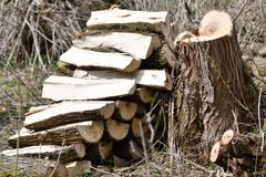 Stacked cutted wood in prism. In the forest stock image