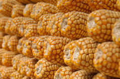 Stacked Dried Sweetcorn Stock Image