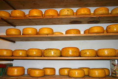 Stacked Dutch Cheese. In Cheese Farm Stock Image