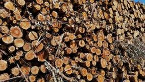 Stacked eucalyptus wood Stock Photography