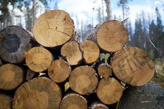 Stacked felled tree trunks in a forest Stock Image