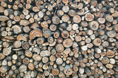 Stacked firewood background Royalty Free Stock Image