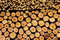 Stacked of firewood Stock Images