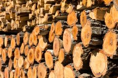 Stacked of firewood Stock Image