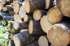 Stacked firewood closeup Stock Photo