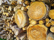 Stacked firewood logs Royalty Free Stock Image