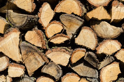 Stacked firewood prepared for winter. Royalty Free Stock Photography