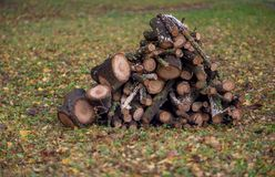 Stacked firewood in the yard. After rain on fall ground stock image