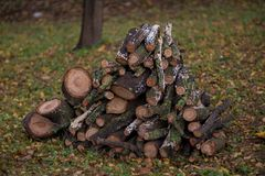 Stacked firewood in the yard Royalty Free Stock Images