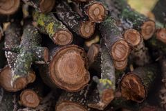 Stacked firewood in the yard. After rain on fall ground royalty free stock photos