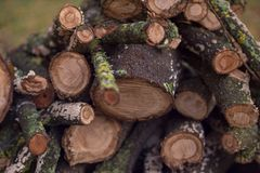 Stacked firewood in the yard Royalty Free Stock Photography