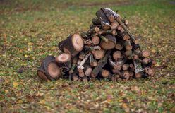 Stacked firewood in the yard Royalty Free Stock Image