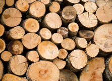 Stacked firewoods. Royalty Free Stock Images