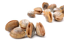 Stacked fresh raw clams. Isolated against white background Stock Image