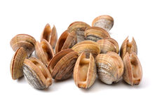 Stacked fresh raw clams Stock Photo