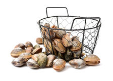 Stacked fresh raw clams. Isolated against white background Stock Photography