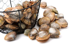 Stacked fresh raw clams. Isolated against white background Stock Photo
