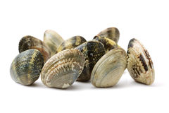 Stacked fresh raw clams. Isolated against white background Stock Photos
