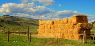 Stacked Hay Bales Stock Photo