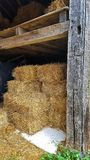 Stacked hay bales in barn Royalty Free Stock Photography