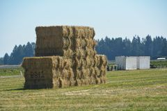 Stacked Hay Bales BBI1 in Willamette Valley, Oregon. This is a stack of hay bales in a field with white storage containers under a blue sky between Salem and Royalty Free Stock Images