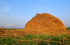 Stacked hay Stock Image