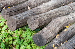 Stacked log cut trees and grass Royalty Free Stock Photos