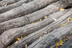 Stacked log cut trees and small leaves Royalty Free Stock Photo