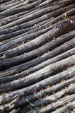 Stacked log cut trees - vertical view Stock Images