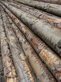 Stacked log long cut trees Royalty Free Stock Images